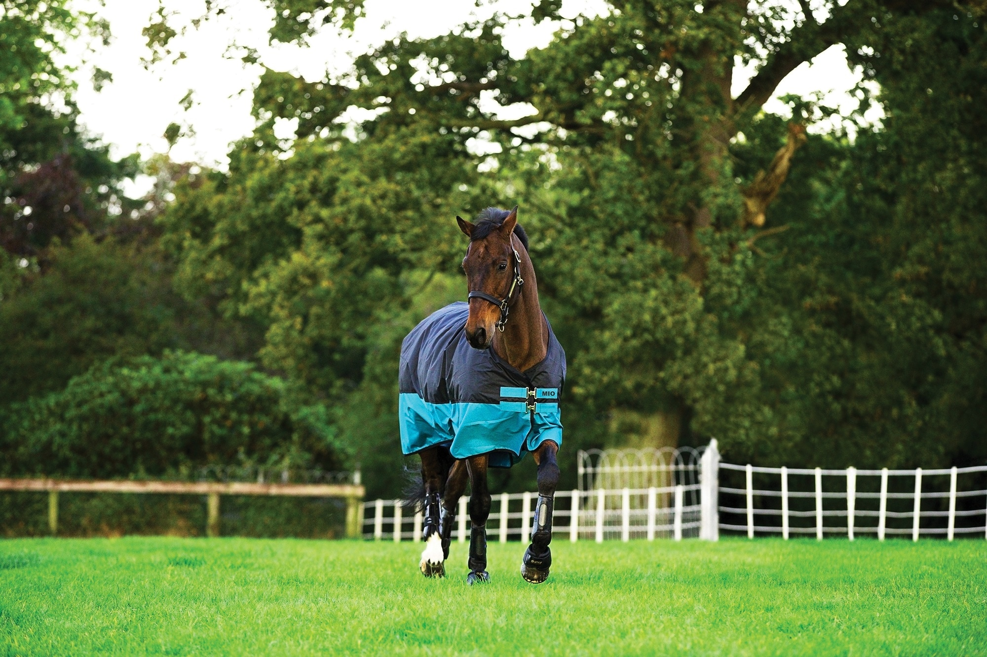 Horseware Mio kevyt ulkoloimi, 0g.